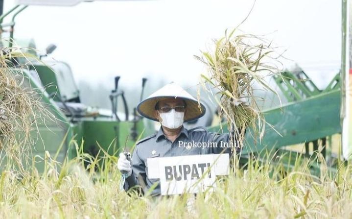 Panen Raya di Benteng, Bupati  Wardan Sebut Inhil Penyumbang Kebutuhan Beras di Riau